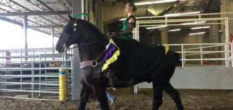Violinist goes from the orchestra to competing in Heavy Horse Show at Calgary Stampede