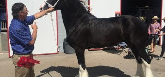 Unsung Hero: Heavy Horse Show's Brian Coleman
