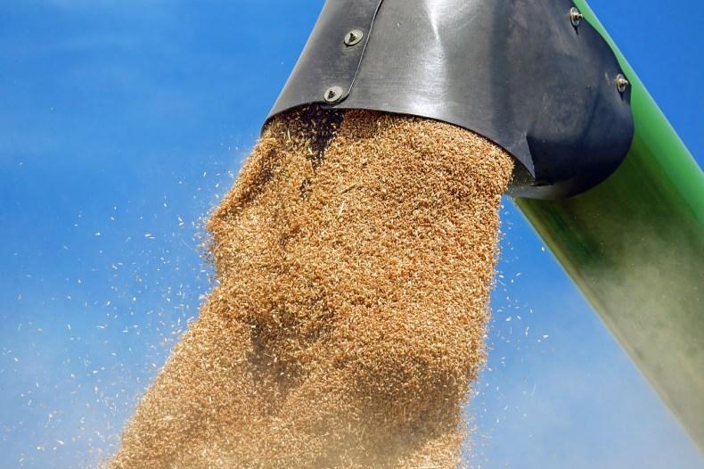 Keeping grain sampling simple