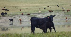 BCRC: Attention researchers: Ag Action Manitoba Program funding available