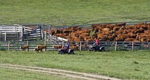 Industry takes stock of achievements guided by the National Beef Strategy