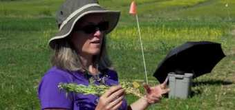 Farming Smarter: Root Rot in Pulse Crops – Medicine Hat Field Day
