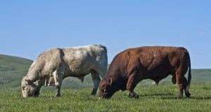 BCRC: Bull Selection: Breeding programs that suit operational goals