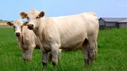 Canadian Cattlemen's Association and Weather Network to meet after controversial tweet