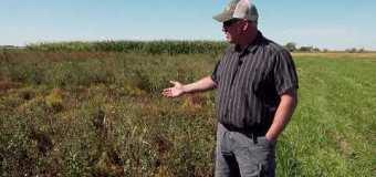 Farming Smarter: Plot shots – Fall weed management tactics