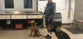 Training dogs to detect clubroot contamination