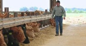 BCRC: Resources for Beef Producers during Market Disruptions