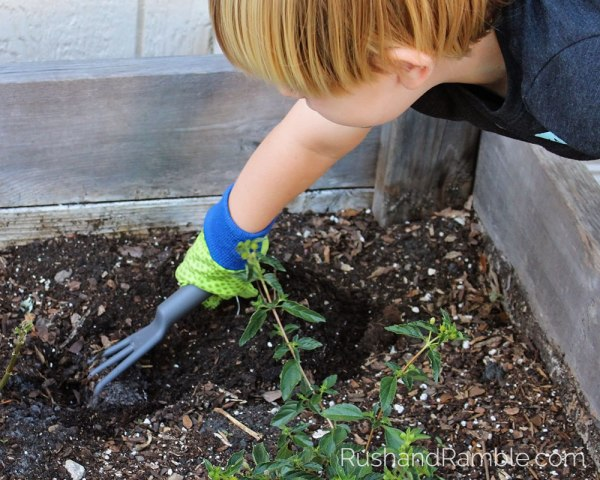 Planting the Butterfly Garden   Milkweed, Monarchs and Masterpieces: The Tale of a Preschooler and His Butterfly Garden