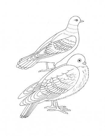 Раскраска для самых маленьких - Птицы » Развитие детей ...