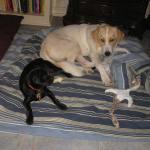 Rascal and Hope Pet Photo