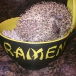 Maruchan the Hedgehog-russellfeedandsupply.com