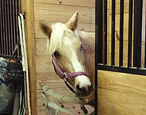 Senior horse care checklist- https://www.russellfeedandsupply.com