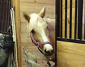 Senior Horse Care Checklist