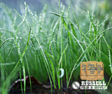 russell-feed_ryegrass-ad-special-fb-post