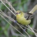 Wild Bird Migrations in DFW