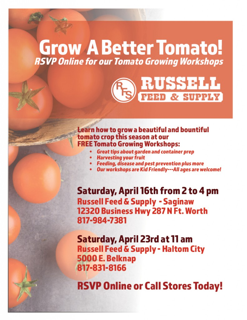 Tomato Growing Workshop
