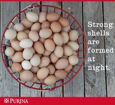 Strong Eggshells