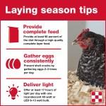 Flocktober Poultry Owner Workshops
