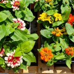 Russell Feed Flowers April 20-4