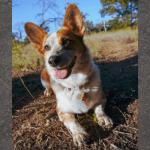 Russel Pet photos (8)
