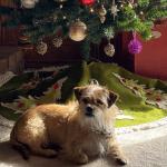 Russel Pet_cap photos (18)