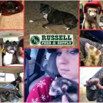 Russel Pet_cap photos (19)