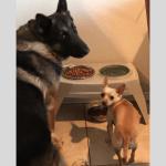Russel Pet_cap photos (21)