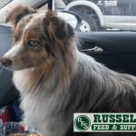 Russel Pet_cap photos (27)