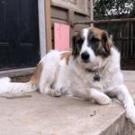 Russel Pet_cap photos (9)