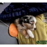 Pet Photos of the Week (10)