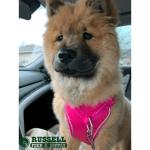 Pet Photos of the Week (11)