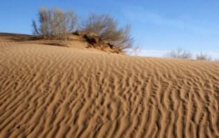 Kyzyl-Kum-desert-1