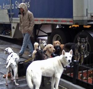 movie_dogs