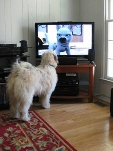 tv_dog