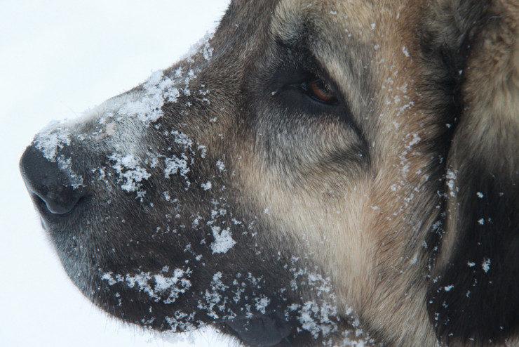 caucasian female dog