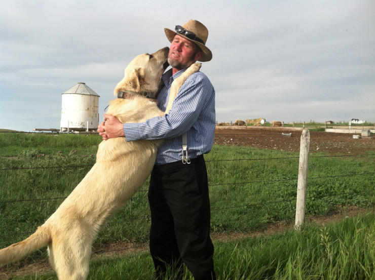 Kangal dog breed in the US