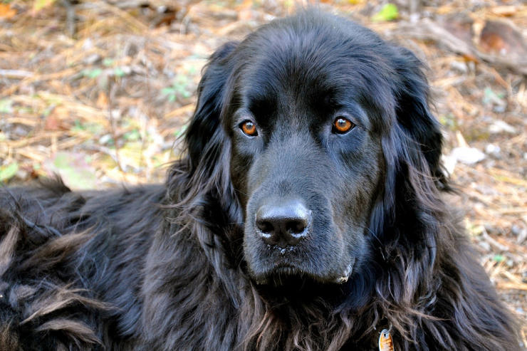 Best Books About Newfoundland Dogs