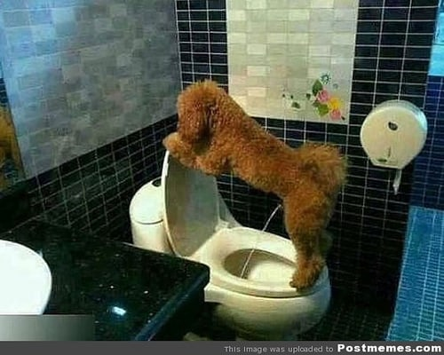 potty training photo