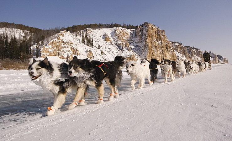 Yakutian Laikas
