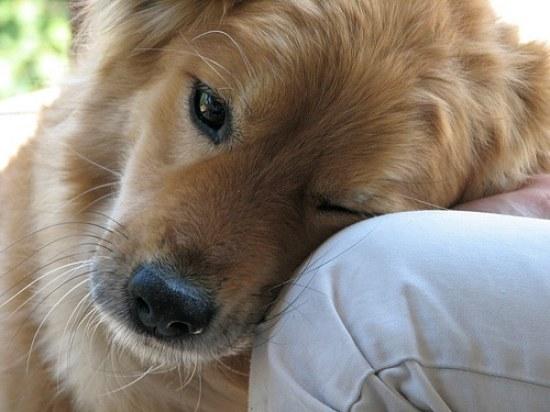 dog trust photo