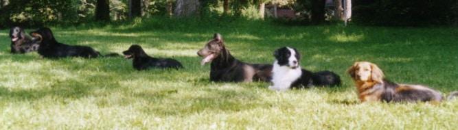 Blind Dog ObedienceTrials