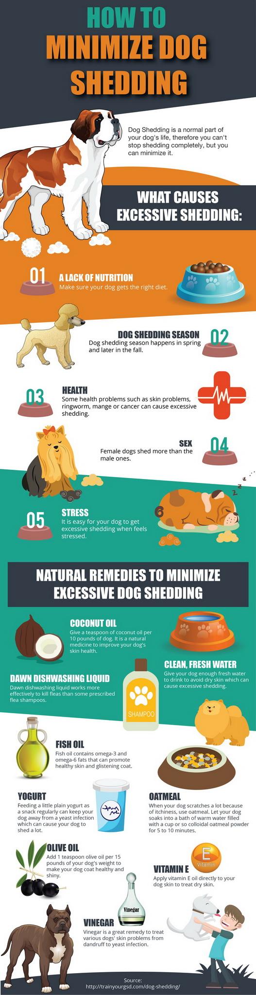 Minimize dog shedding solutions Infografic