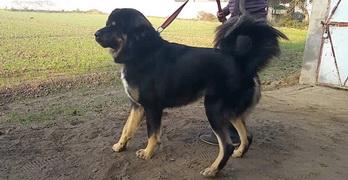 Dog Breeds in India: 10 Best
