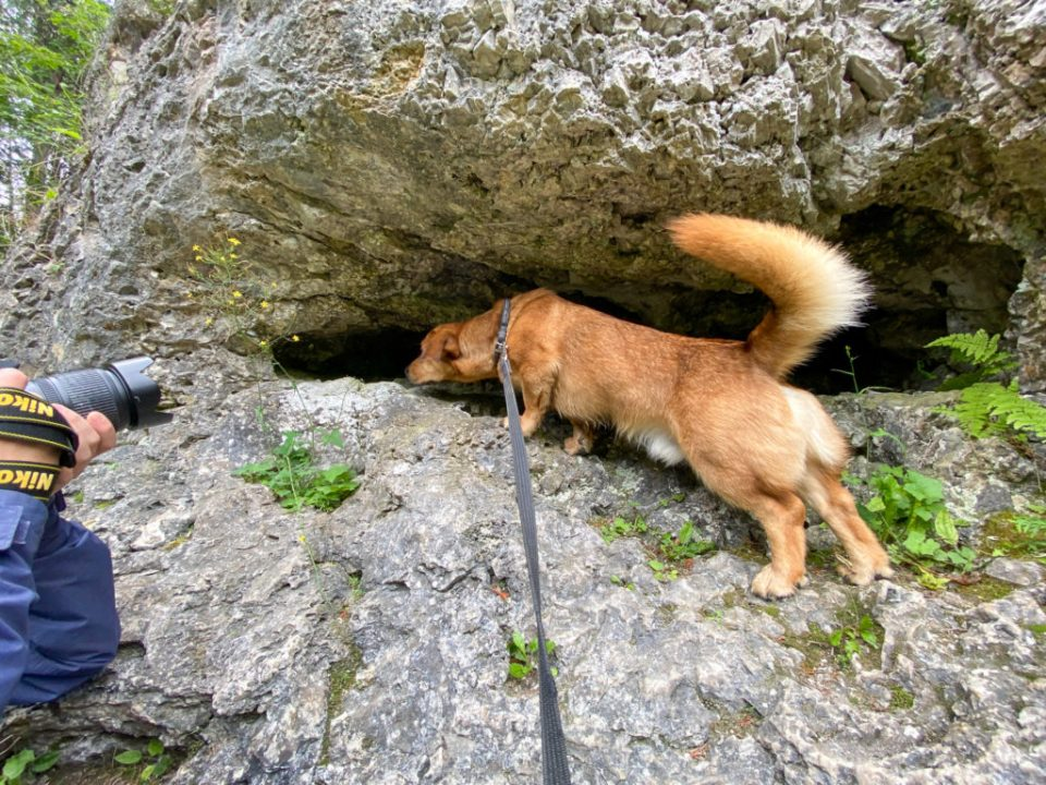 dog on the rock