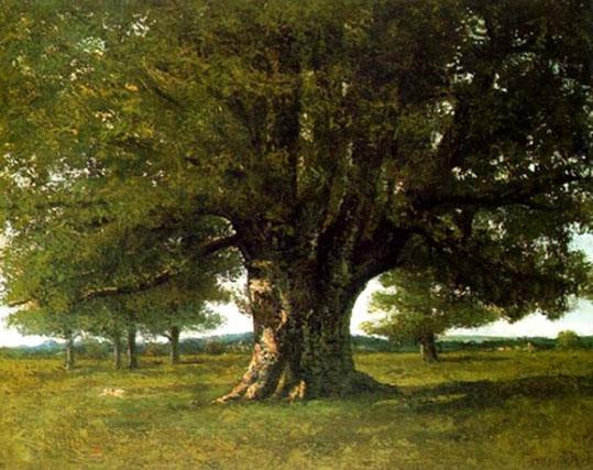 Resultado de imagem para árvores de carvalho