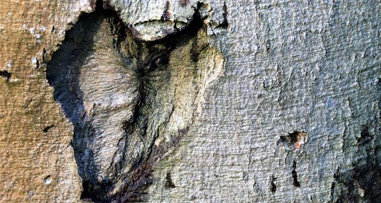 Vorm van een hart in een boom - www.rustinmijnhoofd.nu