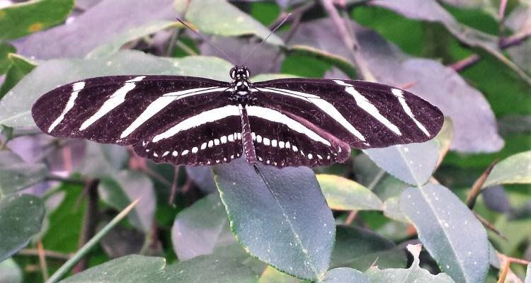 Vlinder op een blad - Rust in mijn hoofd coaching - Wendela van Beek