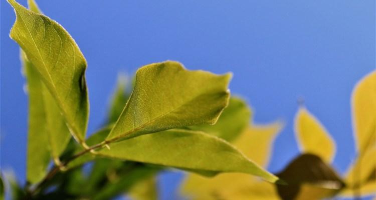 Groene bladeren tegen blauwe lucht - 5 manieren om de dag goed te beginnen