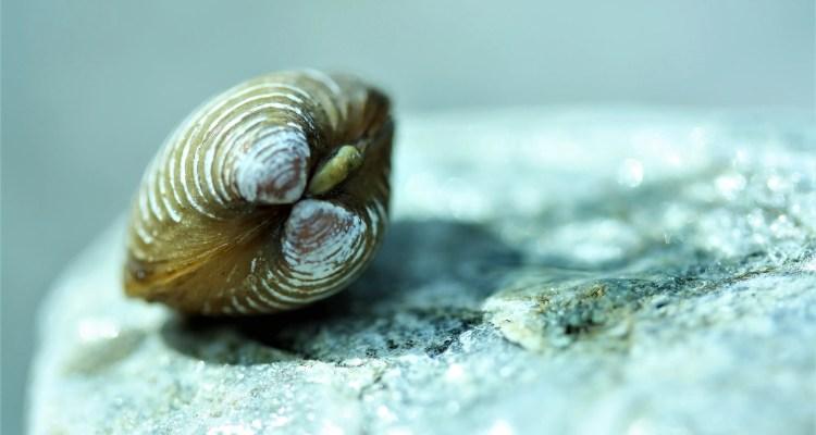 Dichte schelp op een rots - Rust in mijn hoofd - coaching Wendela van Beek
