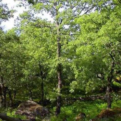 Senderismo_parque_natural_sao_mamede_rutas_pangea